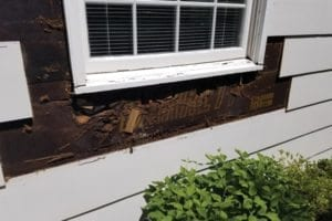 Water-damaged siding around window was removed to reveal damaged wall sheeting